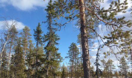 Karhunkierros, la Ruta del Oso en Finlandia
