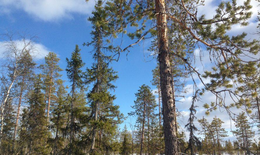 Aventura en Karhunkierros, la Ruta del Oso en Laponia (Finlandia)