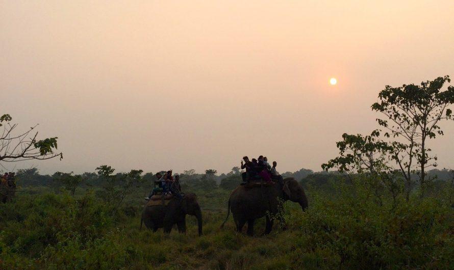 Safari en el Parque Nacional de Chitwan (Nepal)
