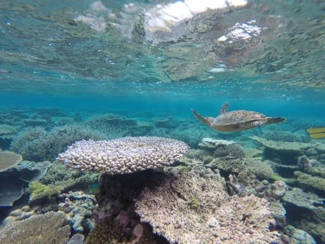 Buceando con tortugas en Maldivas