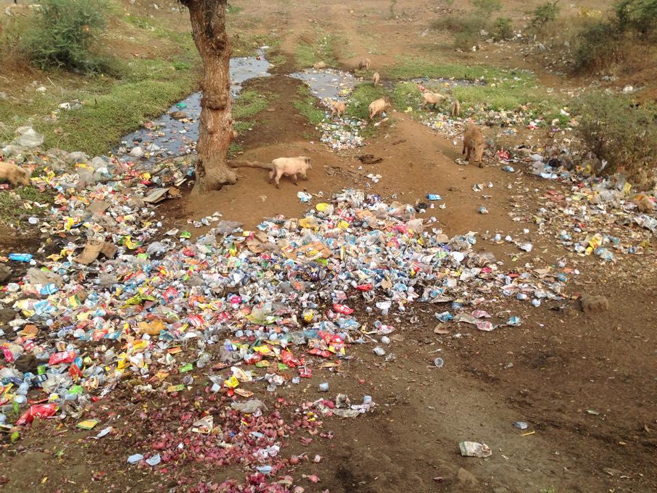 Cerdos comiendo basura al lado de la carretera, en el norte de India