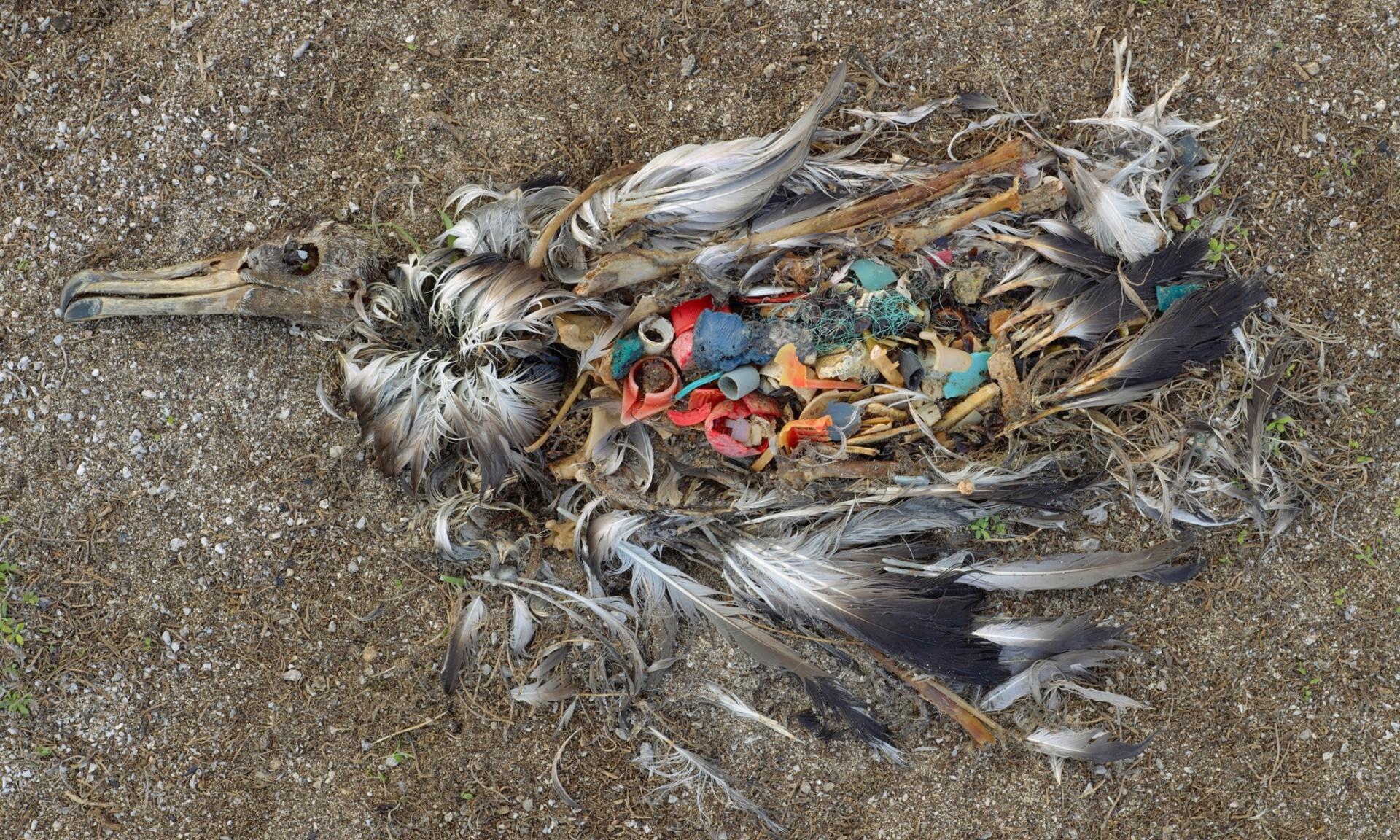 Gaviota Comiento Plástico