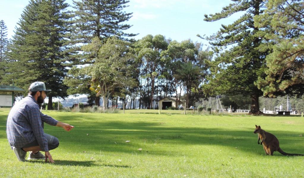 Qué ver cerca de Sydney; los canguros del Basin