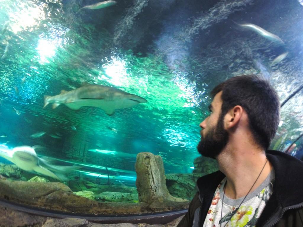 El Aquarium de Sídney, visitarlo es una de las actividades que hacer en Sídney