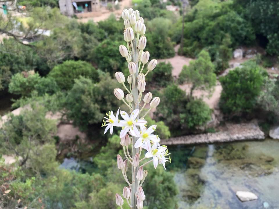 Flor de Akchour
