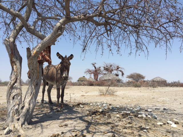Aldea Botswana