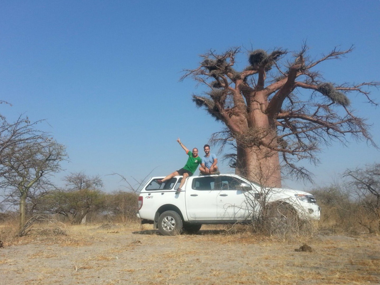 Baobab coche
