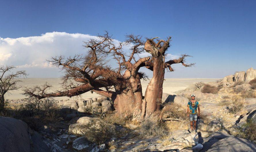 Baobabs en el salar: Kubu Island (Botswana)