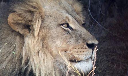 ¿Moremi en Botswana es peligroso?