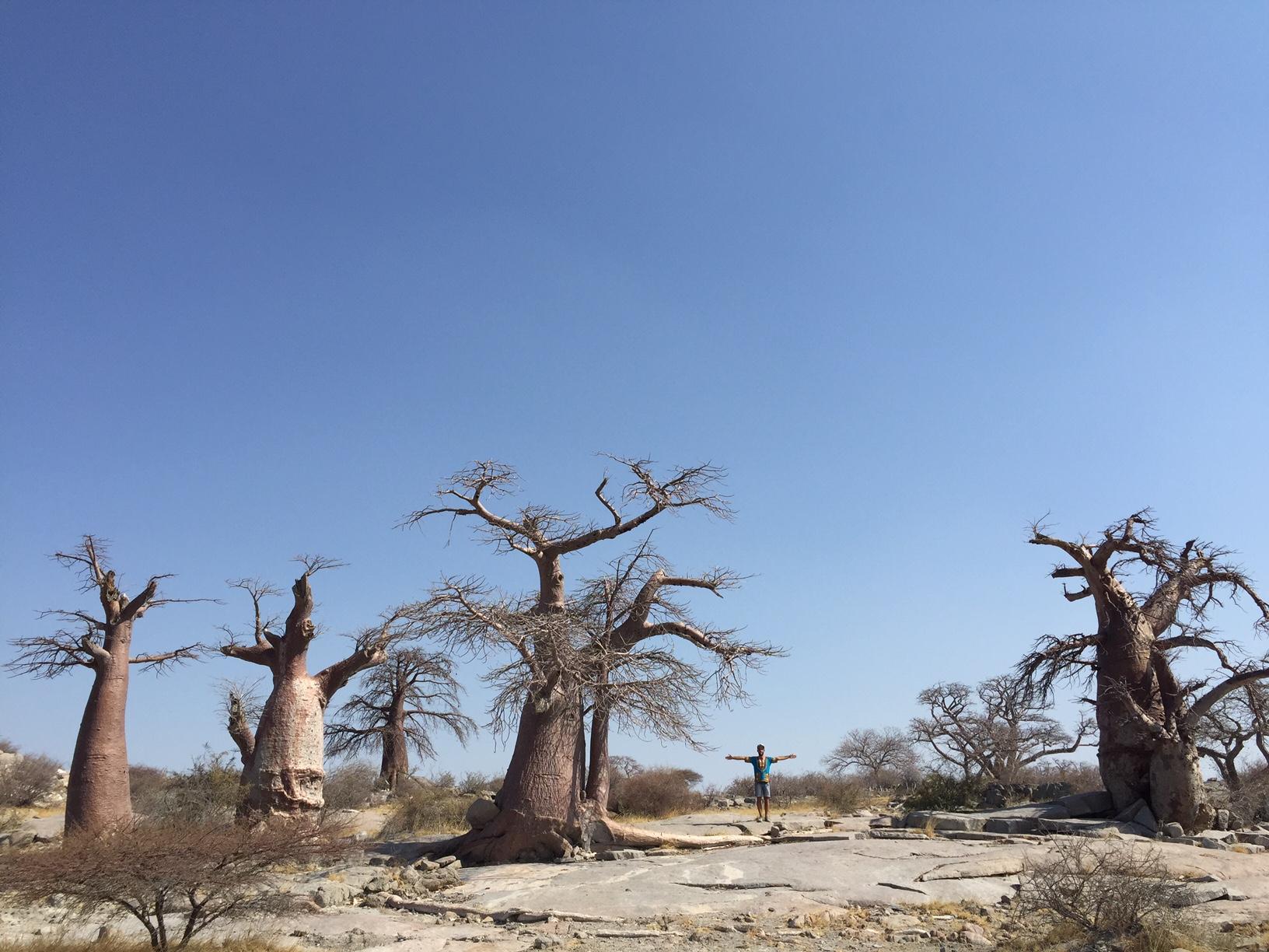 Non Gogoa Han Zangoa Baobabs