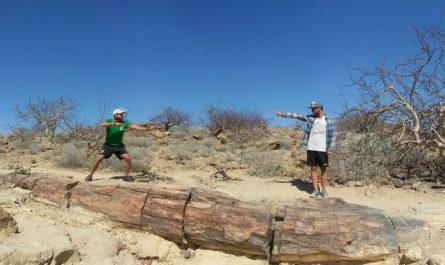 Bosque Petrificado de Namibia