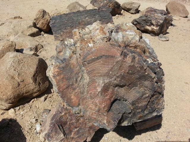 Tronco del Bosque Petrificado de Namibia