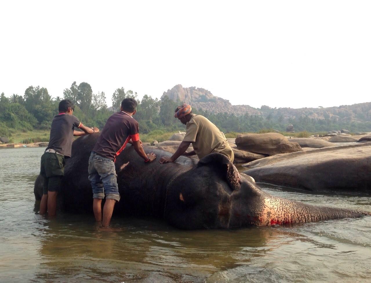 varios hombres limpian un elefante en Hampi, cosas de viajar de mochilero a India