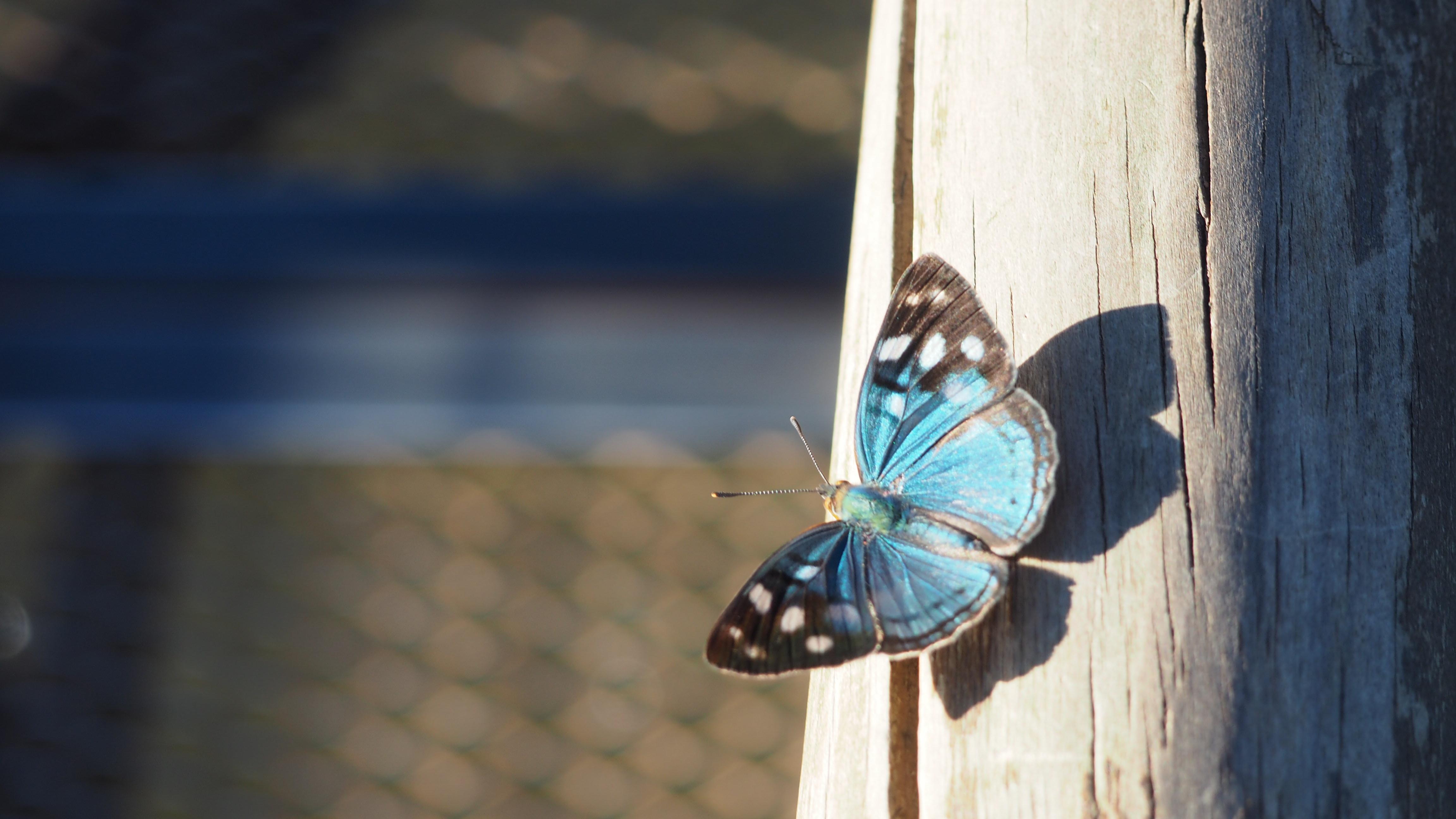 Uno de los muchos tipos de mariposa que se pueden ver al visitar las Cataratas de Iguazú