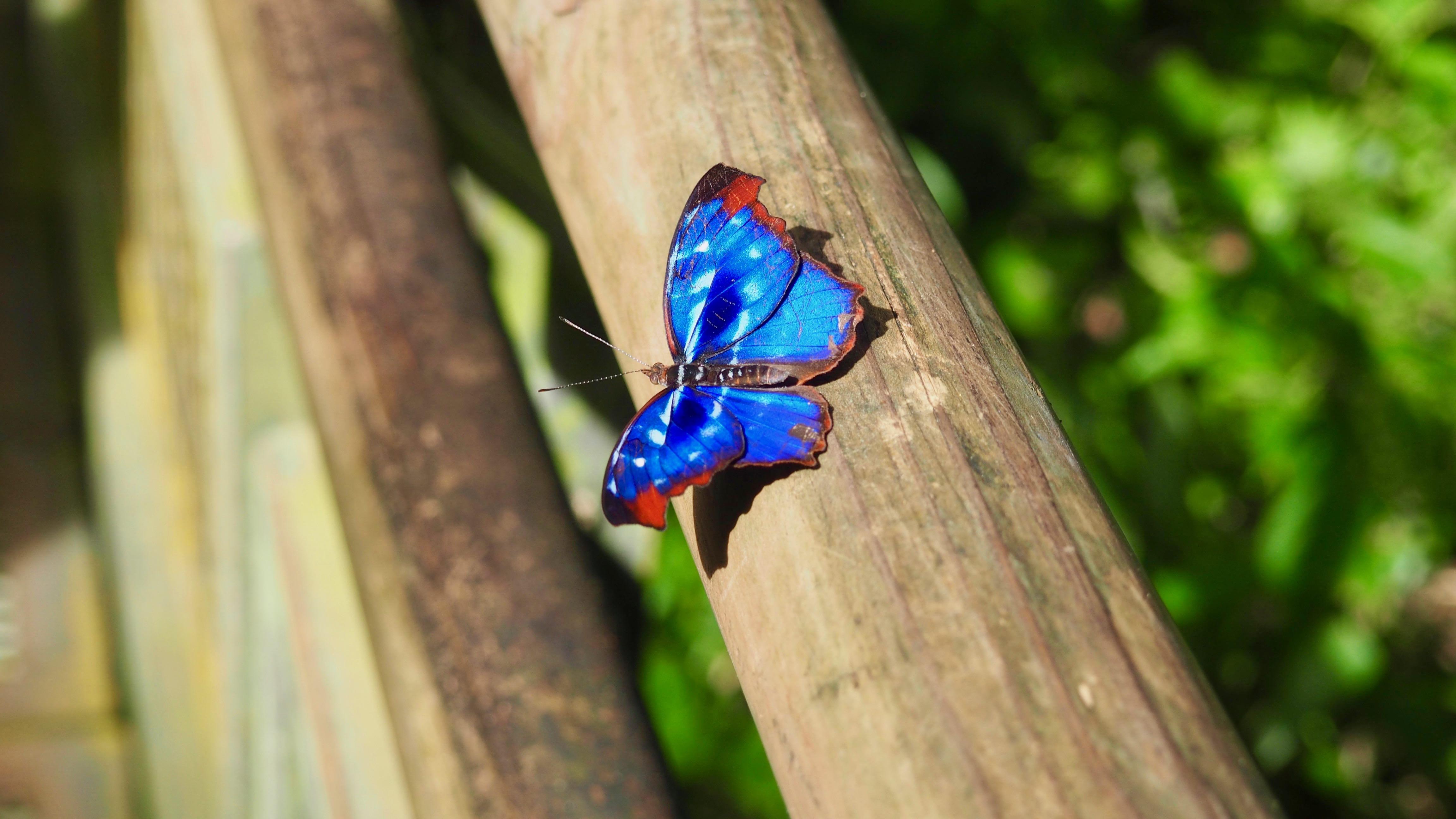 Uno de los muchos tipos de mariposa que se pueden ver al visitar las Cataratas del Iguazú