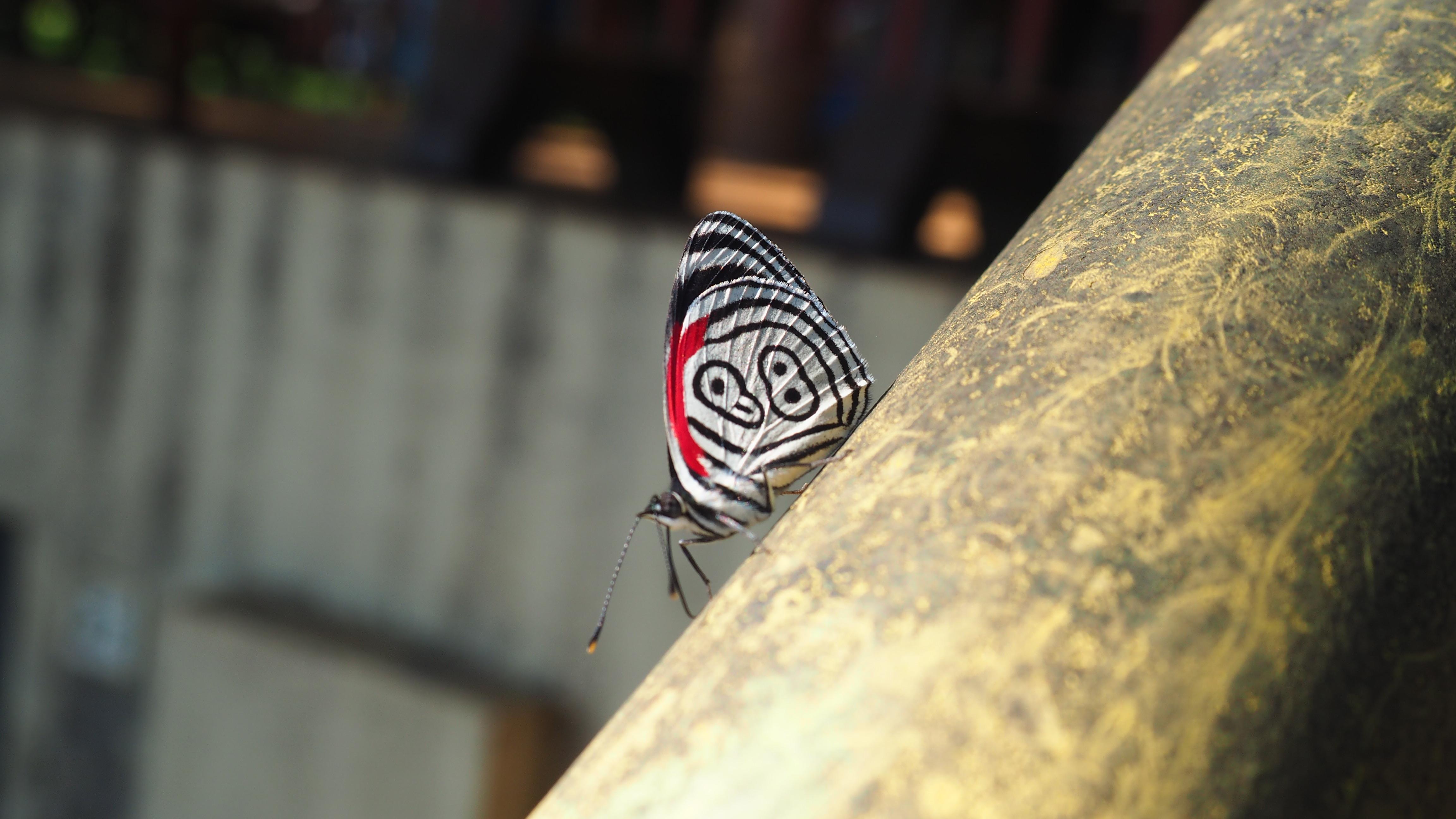 La mariposa 88 en el Parque Nacional de las Cataratas de Iguazú