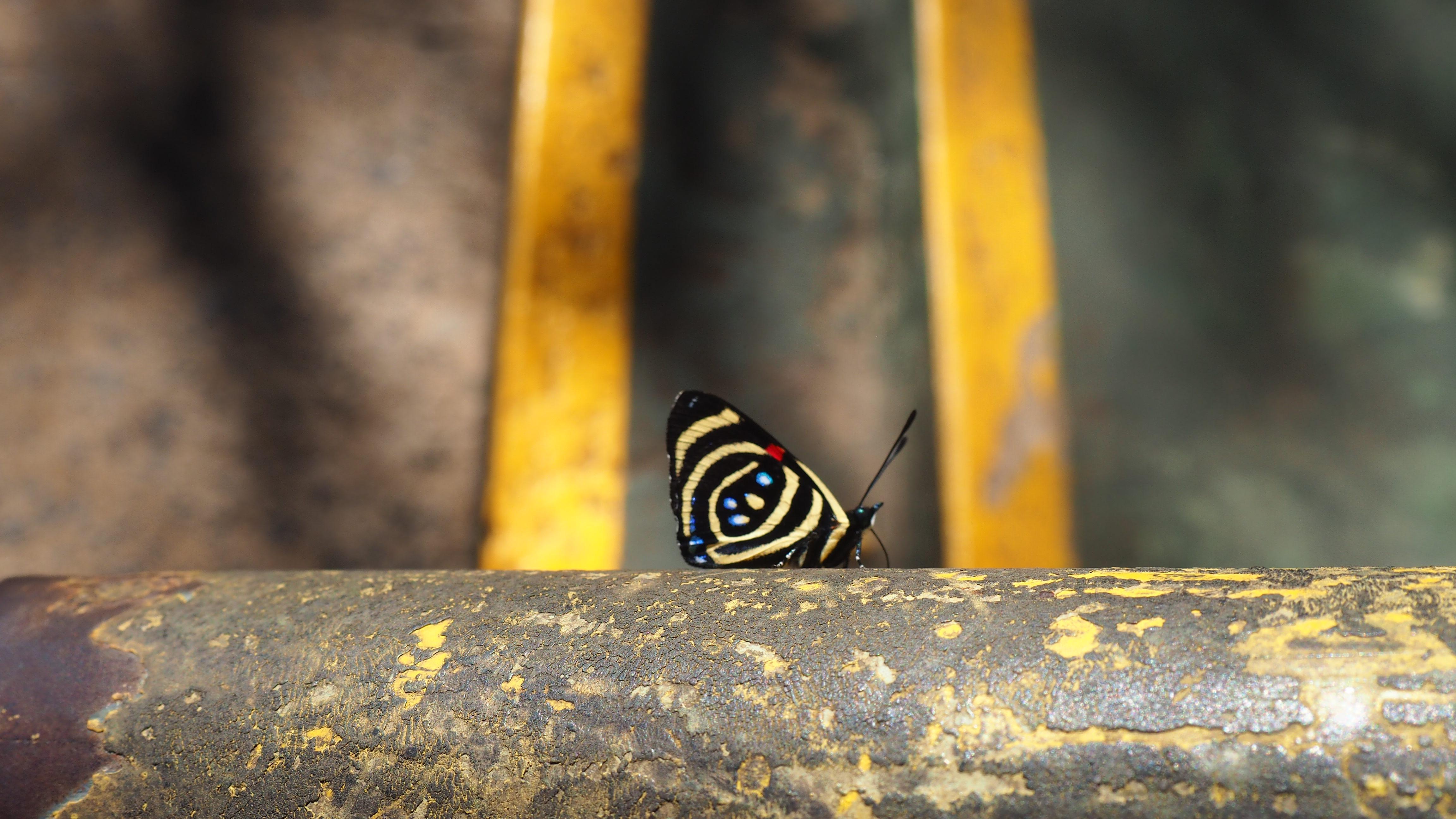 Mariposa en las Cataratas de Iguazú