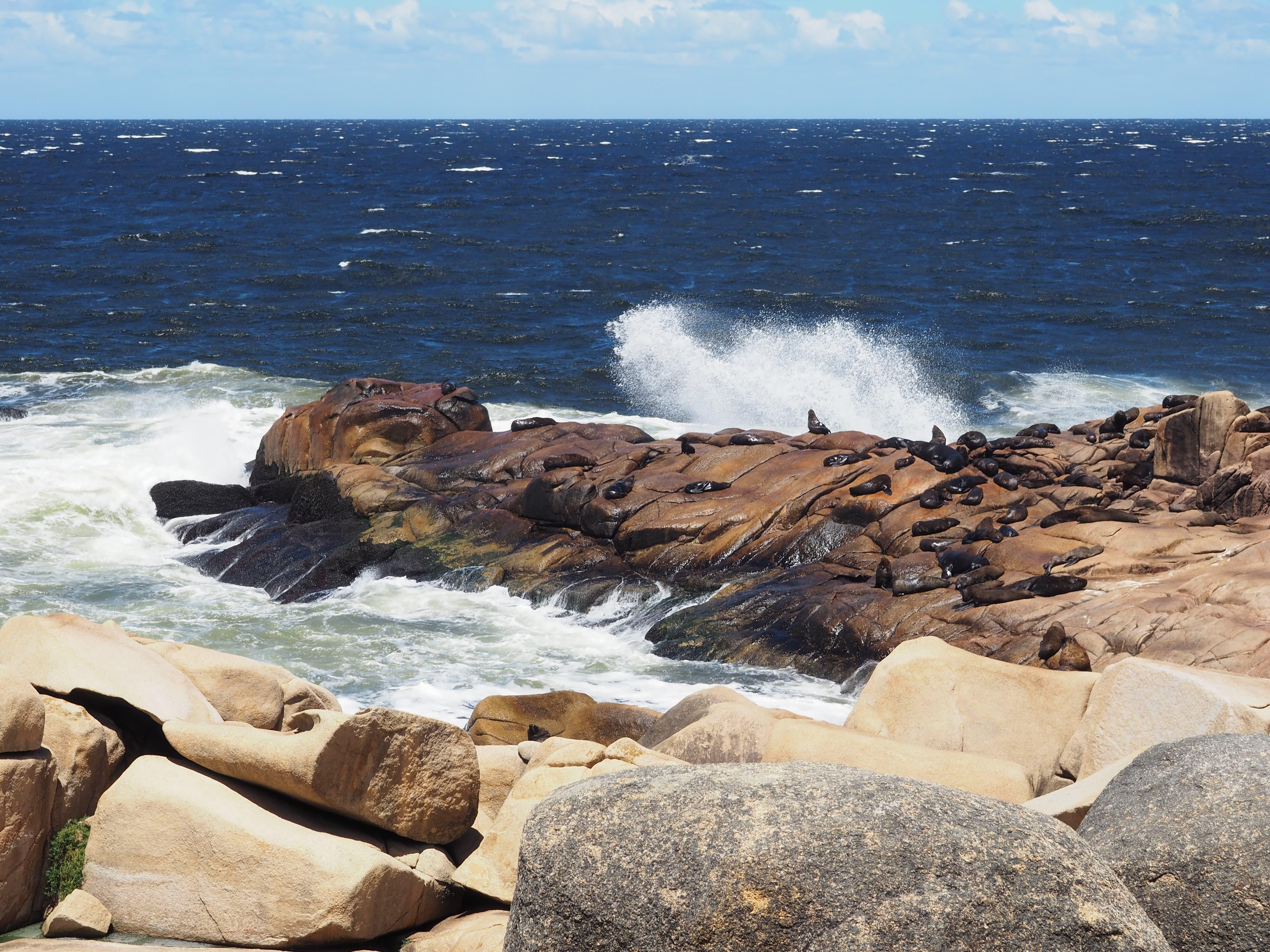 Lobos marinos en Cabo Polonio; una de las mejores cosas que ver en Uruguay