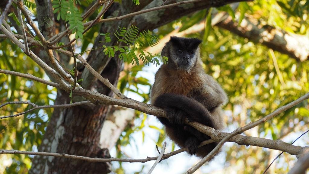 Cómo organizar el viaje al Pantanal de Brasil