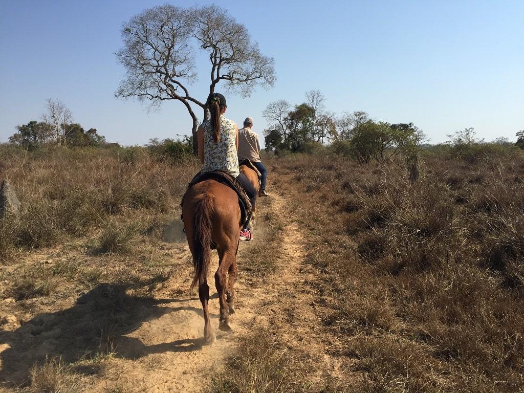 Actividades en el Pantanal