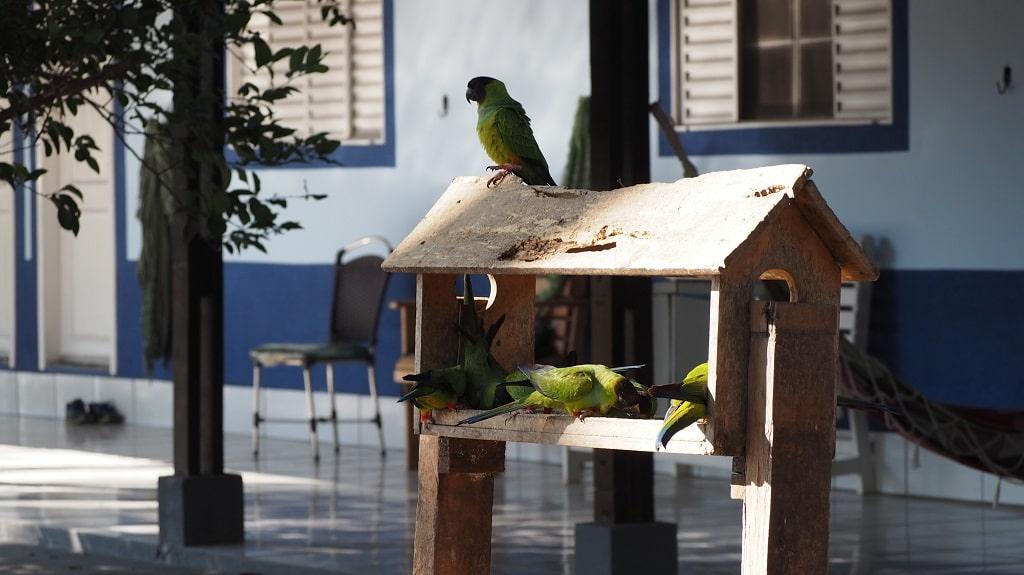 Alojamiento en el Pantanal (Brasil)