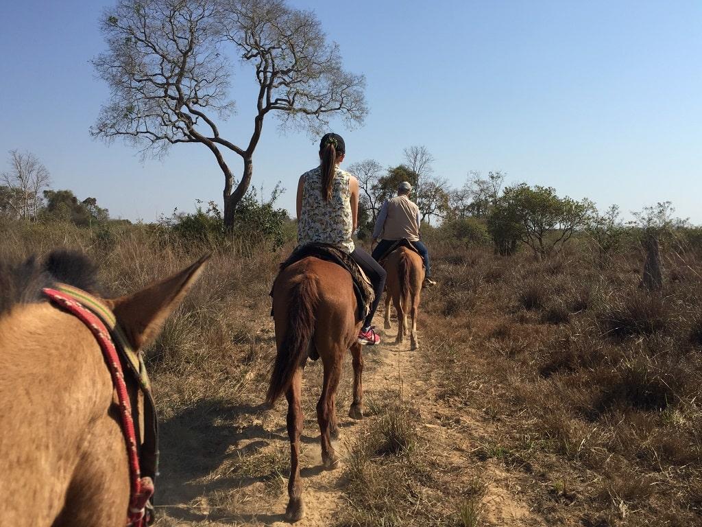 Paseo a caballo, de las mejores cosas que hacer en el Pantanal del Brasil