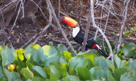 Qué ver en el Pantanal y qué hacer en el Pantanal de Brasil