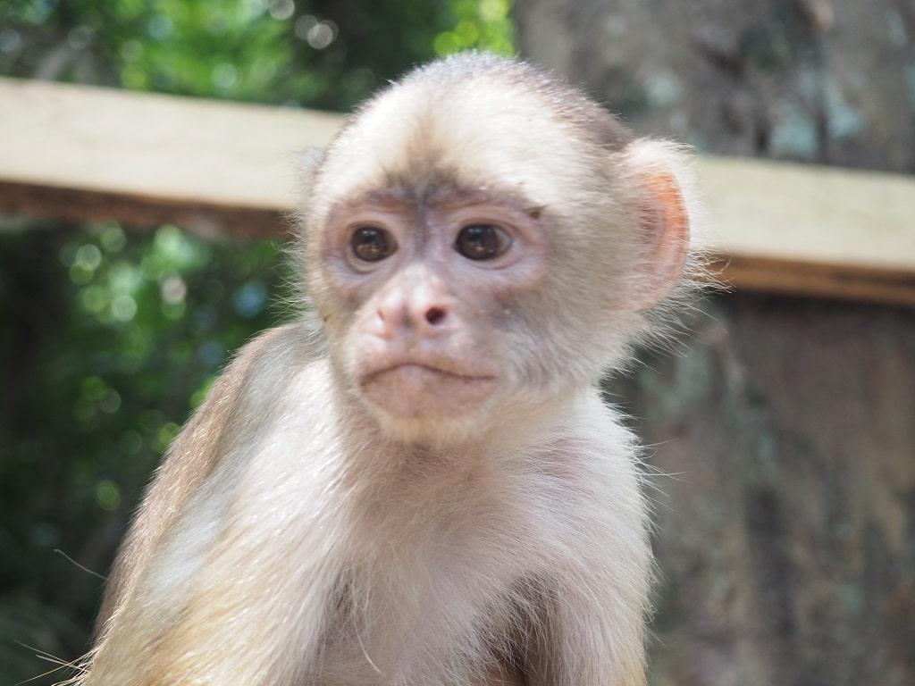 Tour por el Amazonas desde Manaos